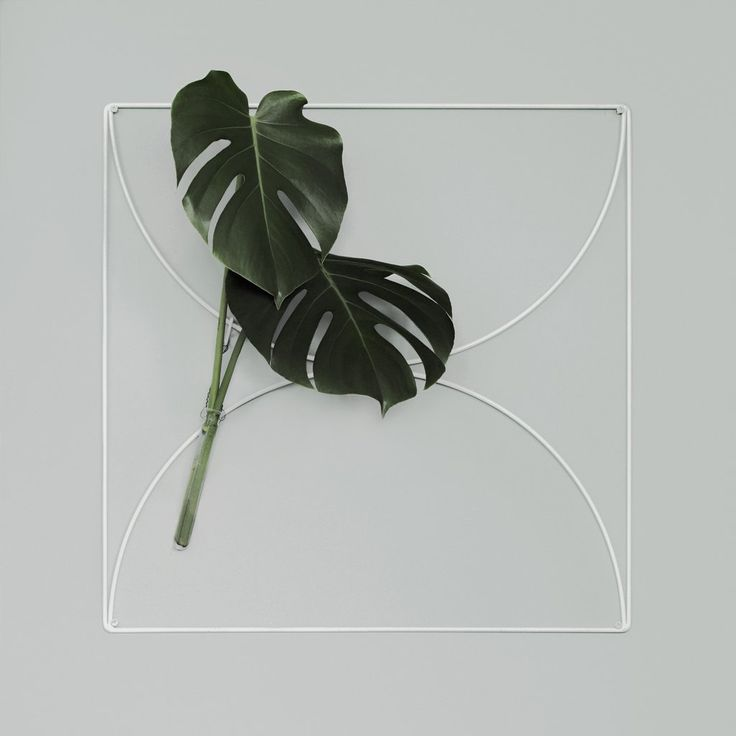 White Wallment Bow Grid | Monstera | Nordic