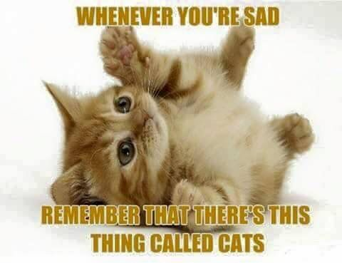78 Best images about Kitty Quotes on Pinterest | I love ...