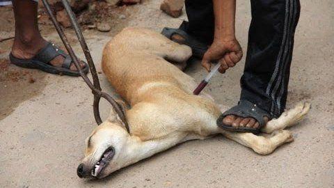 Petition · PROHIBIR SACRIFICIOS DE ANIMALES EN LAS PERRERAS DE MÉXICO · Change.org