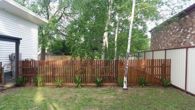 Yuccas with merbau fence