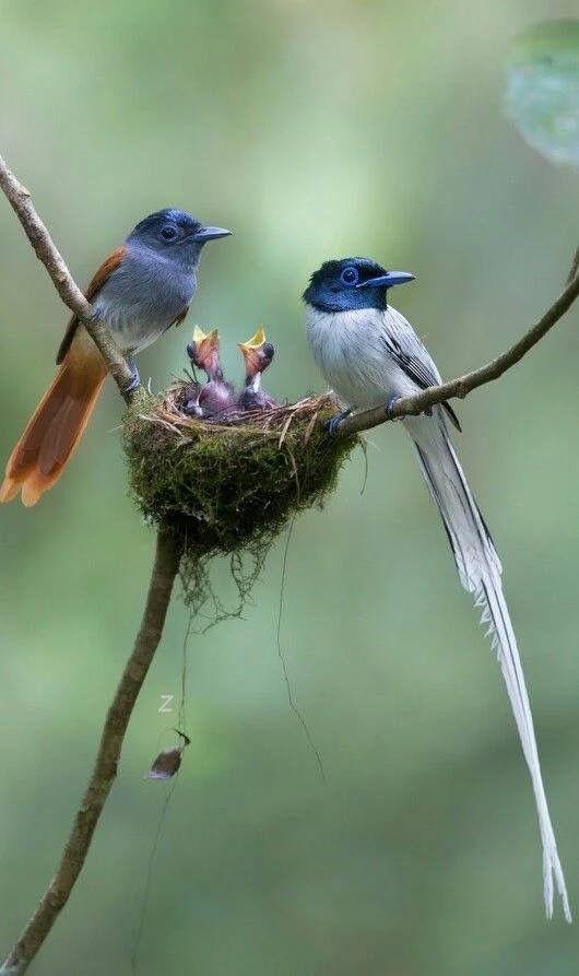 little birds.