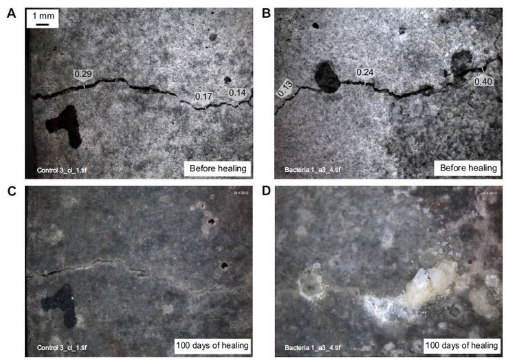 Figure 7 Images of the crack-healing process in control mortar specimens before (A and B) and after 100 days of healing (C and D).