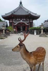 「奈良 鹿」の画像検索結果