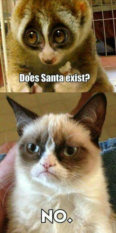 Grumpy Cat is so mean!