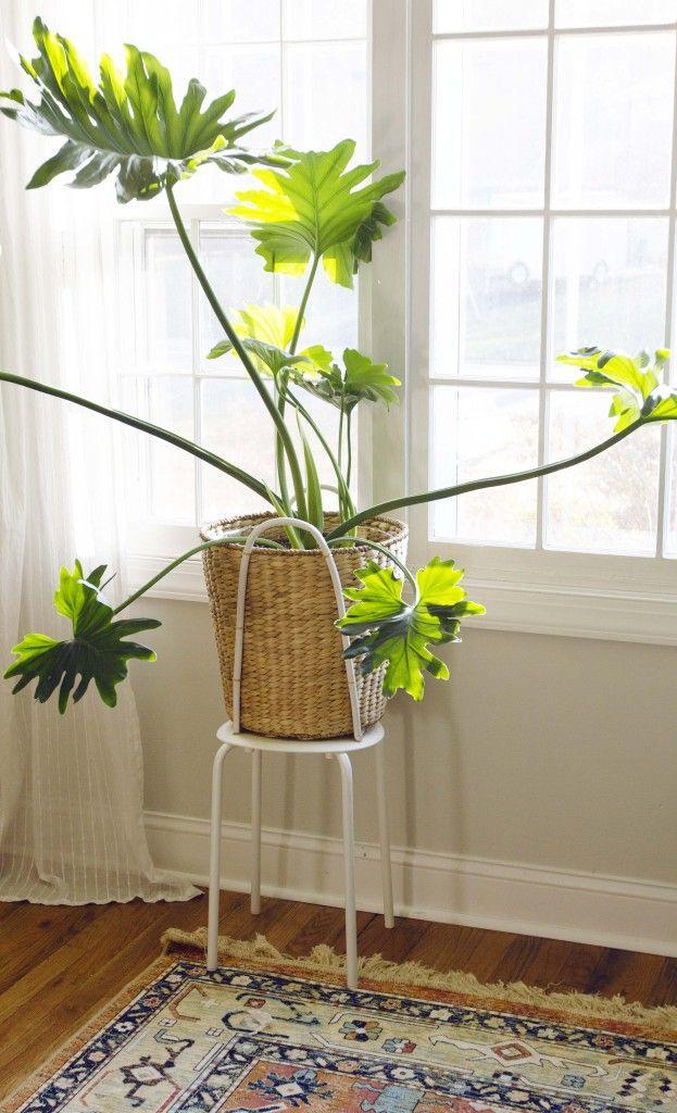 352 Best Images About Windowsill Plants On Pinterest