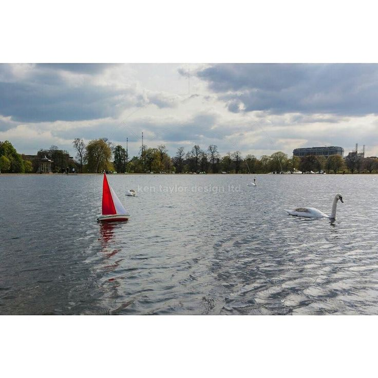 Remote controlled boat chasing a mute swan (Cygnus olor) Round Pond Hyde Park London England United Kingdom  www.alamy.com/image-details-popup.asp?ARef=F1B5H6  #activity #boat #control #float #fun #hobby #lake #leisure #miniature #model #nautical #outdoors #park #play #pond #pool #radio #rc #recreation #red #remote #sail #sailboat #sea #small #toy #vessel #water #wave #yacht