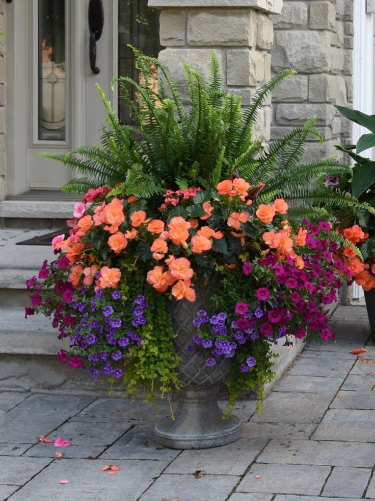 beautiful flowers #blumen #schone