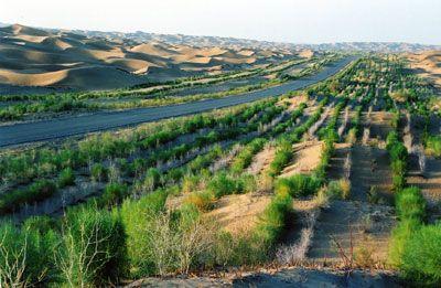 中国の砂漠化、抑制進む 年に2491平方キロ減少_中国網_日本語