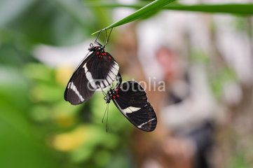 Papillon - Rencontre amoureuse