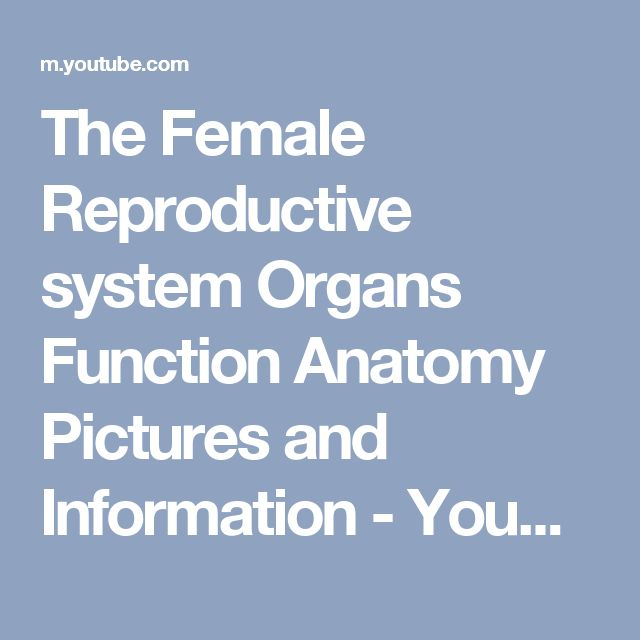 The Female Reproductive system Organs  Function Anatomy Pictures and Information - YouTube