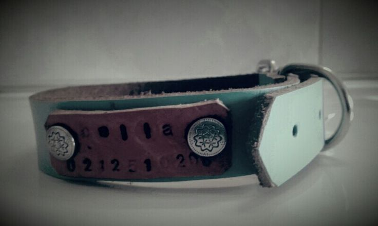 Dog collar made for my mums wee doggie!