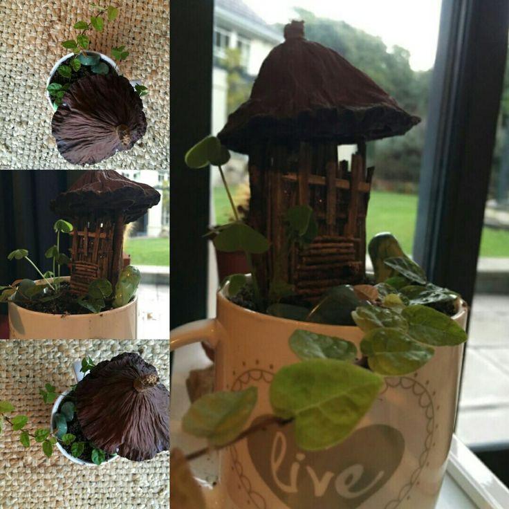 Mug Garden - one of my mugs cracked down the side.