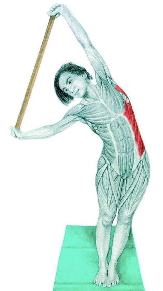 Растягивает внешние косые мышцы живота и широчайшей мышцы спины.