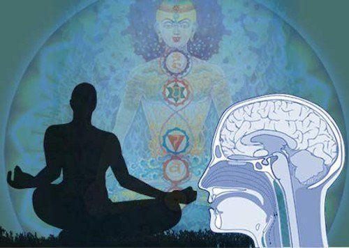 Une étude d'Harvard dévoile ce que la méditation fait littéralement au cerveau | Stop Mensonges