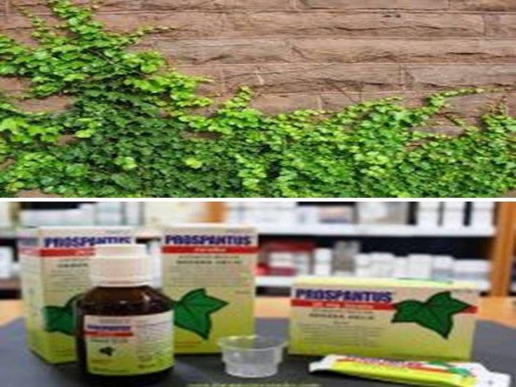 En el #blog hablamos hoy de la #hiedra, un #remedio #natural para tratar la #tos productiva. https://farmaciamoralesblog.wordpress.com/…/la-hiedra-un-r…/  https://www.facebook.com/farmacia.doctora.morales #farmacia #barcelona #Hospitalet de llobregat #tosproductiva #prospantus
