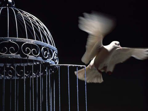 ........................: Post, Inspiration, Quotes, Freedom, Birdcage, Bird Cages, Birds, Animal