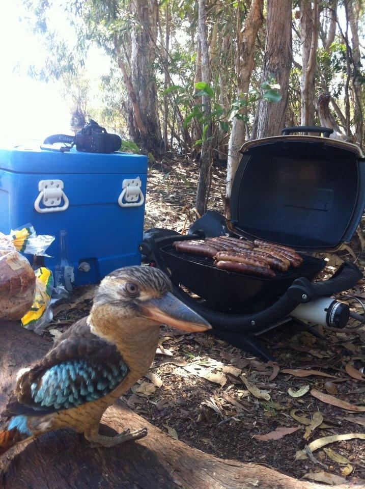 The Great Aussie BBQ!....and a Beautiful Aussie Bird to snatch a sausage! NT, Australia