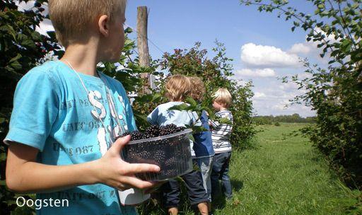 Pluktuin Sprankenhof in Udenhout: een lekker uitje voor het hele gezin.
