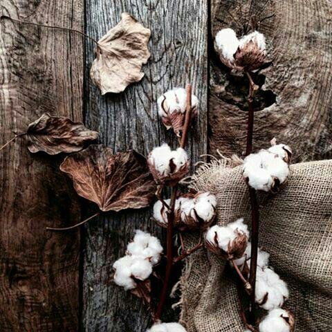 Dry wood, coton...etc.