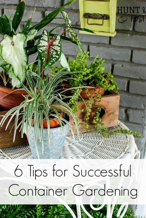 6 tips for successful container gardening Want your patio to look straight out of a