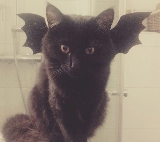 Meeko Flaggerpus  #batcat