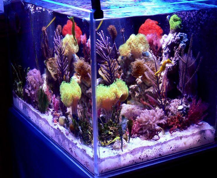 Macro seahorse 39 fuge reef tank reef aquariums for Aquarium nano marin