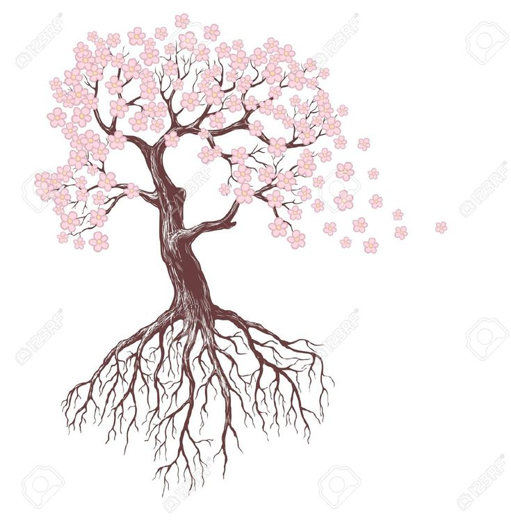 Flower Tree Line Drawing : Spring tree with pink blossoms stock vector