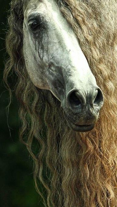 Beautiful horse ✿⊱╮