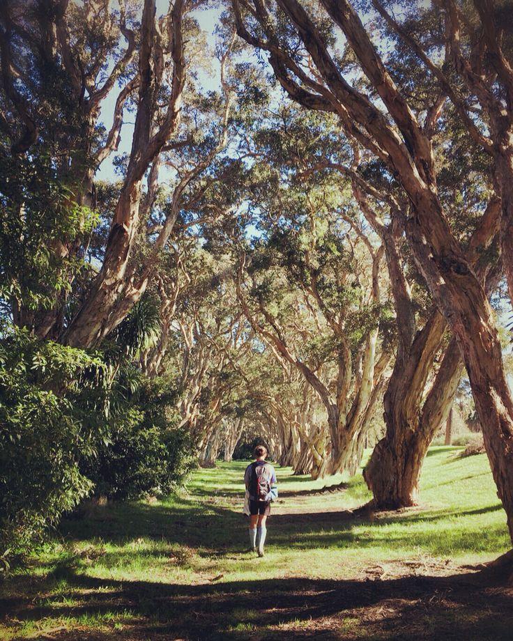 Walking through a Corridor of Trees at Centennial Park in Sydney
