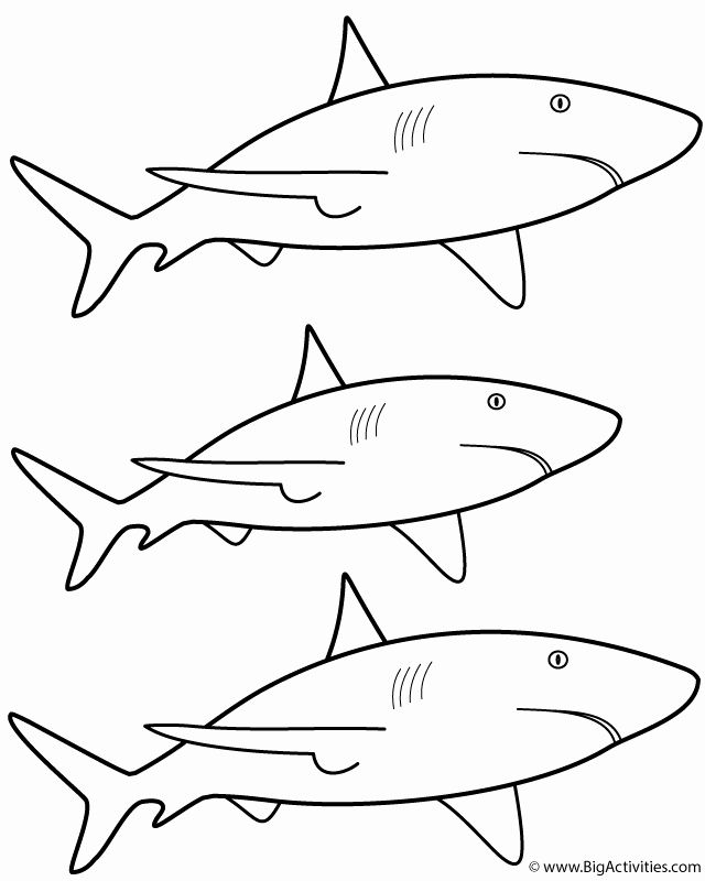 28 Great White Shark Coloring Page In 2020 Shark Coloring Pages Great White Shark Shark Quilt