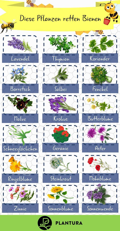 Top 10 der bienenfreundlichen Pflanzen (Übersicht)