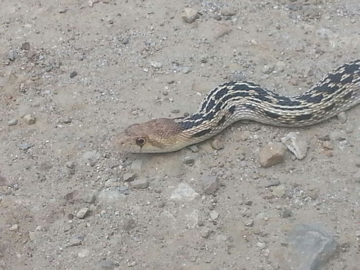 Wondering what kind of snake this is