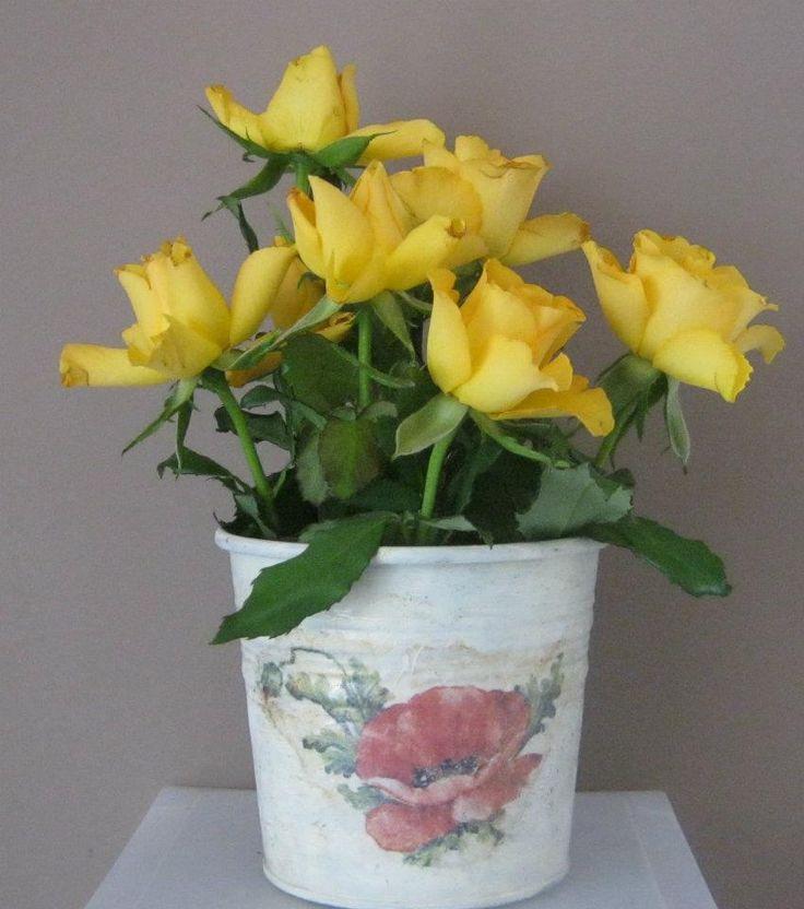 Poppy flower pot Copyright@ Laura Ciocoiu