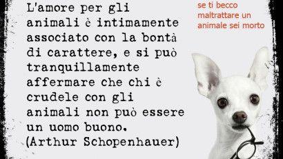 Aforisma di Schopenauer Aforisma sugli animali www.cucciolipazzi.it