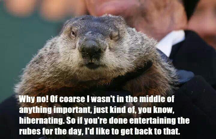 The 25+ Best Ground Hog Day Meme Ideas On Pinterest
