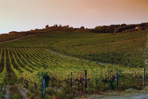 Tuscany wine Italy