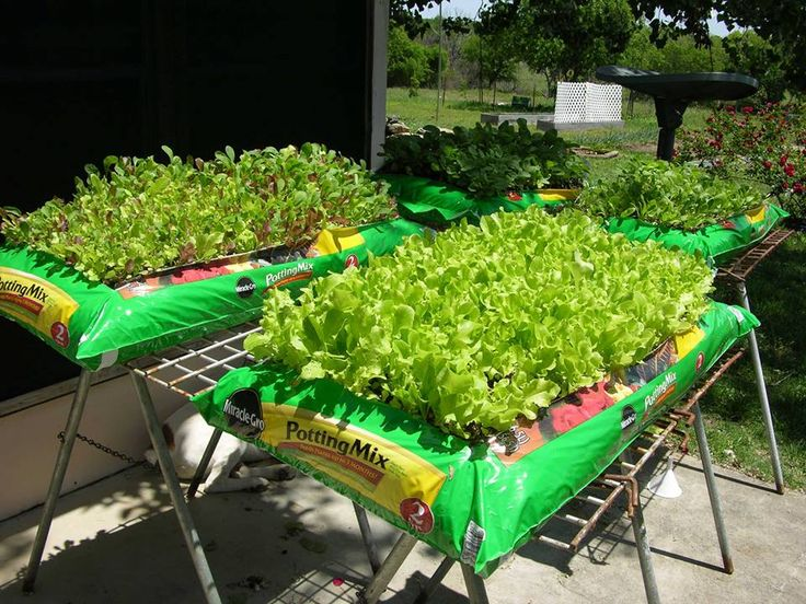 """Bags of potting soil, poke holes in the bottom for drainage. Lay on flat surface that doesn't get too hot. Elevating them keeps the rabbits from nibbling. Cut the top out leaving about a 4"""" border to contain the dirt. Sprinkle seeds and keep moist. Perfect for lettuce, spinach and radishes. (or starting larger seedling)"""