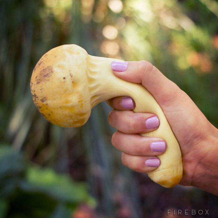 How to Grow Gourmet Mushrooms and Make $60,000 Yearly ...