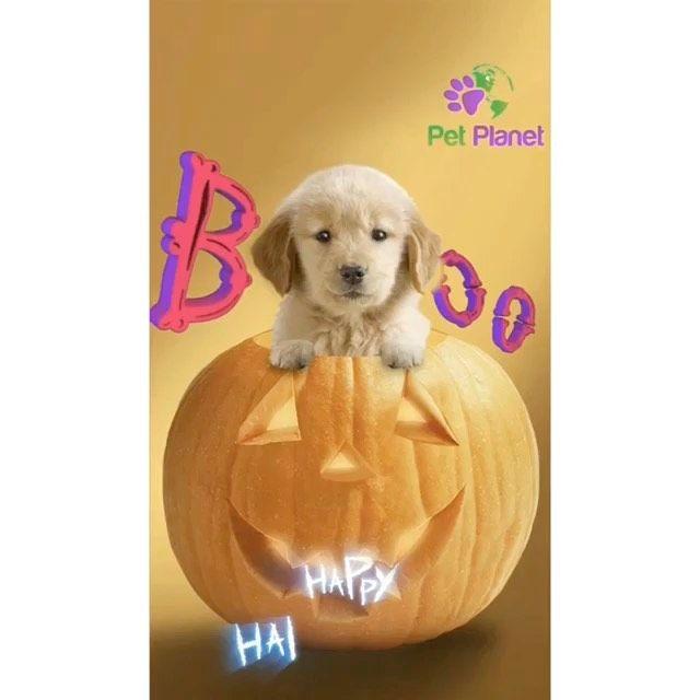 Pin On Cute Pets