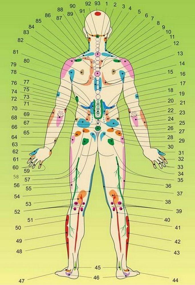 Внутренние органы на теле человека. Акупунктурные точки==========================================1. Нарушения в костной системе. 2. Головка поджелудочной железы. 3. Базилярная недостаточность. 4. Верхний полюс правой почки. 5. Нижний полюс правой почки. 6. Мочеточник правой почки. 7. Дно желчного пузыря. 8. Правая часть поперечно-ободочной кишки. 9. Проток желчного пузыря. 10. Представительство правой молочной железы.   11. Капсула печени, плече-лопаточный периартрит, шейный остеохондроз…