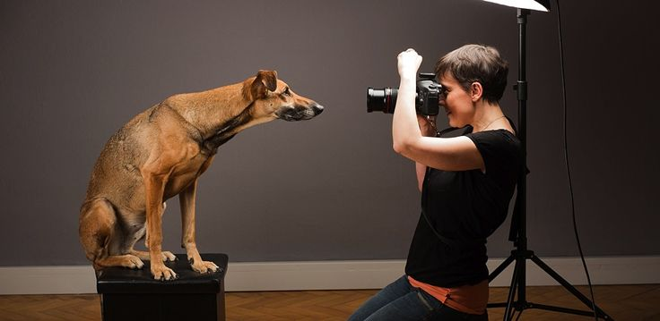 A Day In The Life Of Pet Portrait Photographer Elke Vogelsang