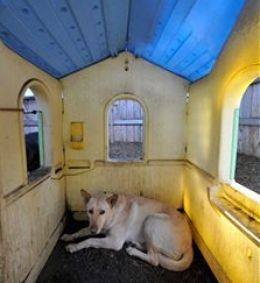 Heated Dog House and other Ways to keep your Dog Warm in Winter