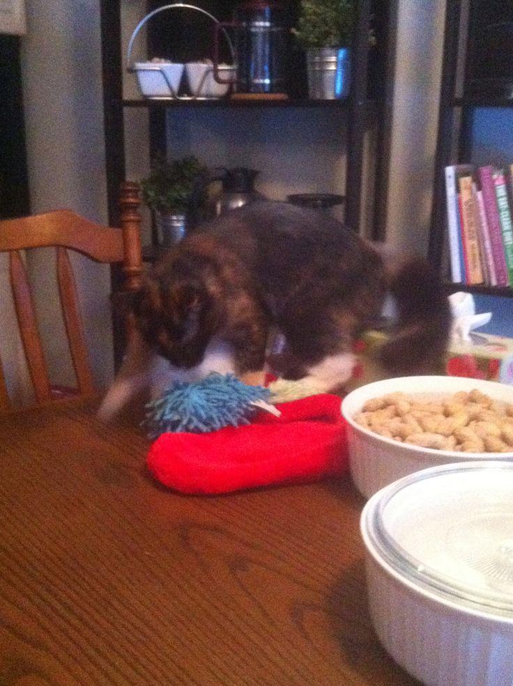 Callie enjoys her toys...