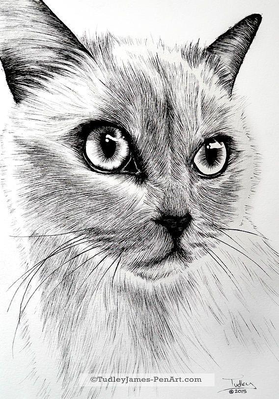 Tiere, Zeichnung