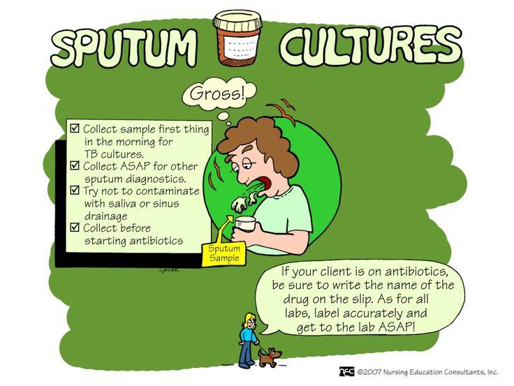 Sputum Culture A Sputum Culture Is A Test To Detect And