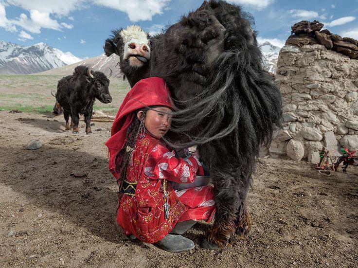 La chiave per la sopravvivenza Fotografia di Matthieu Paley, National Geographic  Ayeem Khan indossa stivali presi in prestito da suo padre e il velo rosso di una ragazza del Kirghizistan non sposata, sarà poi scambiato con uno bianco quando si sposerà. Due volte al giorno munge gli yak della famiglia; alcune cagliate del latte saranno essiccate per l'uso invernale.