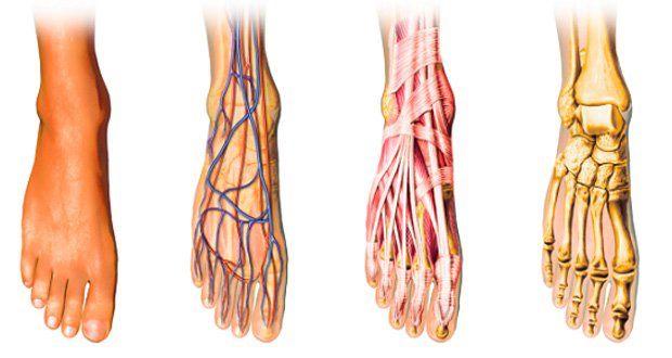 Une mauvaise circulation sanguine, des pieds et des mains froids ? Voici la solution !