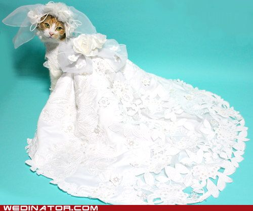 18 best cats in wedding dresses images on pinterest cat