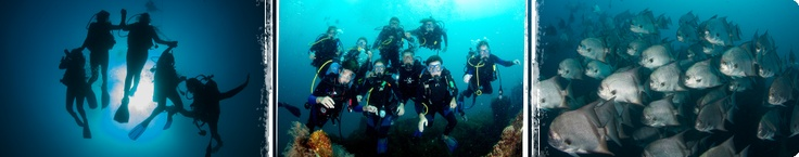 Teen Scuba Camp - Marine Biology Surf Camp. North Carolina was rated #1 by Scuba Diving magazine as one of the top diving destinations in North America. Join teens from all over the world for an overnight adventure that will open your eyes to an intimate view of the marine biology in our amazing oceans! You will be trained by some of the best divers on the East Coast, and by the end of the program, you will receive your PADI SCUBA Certification.