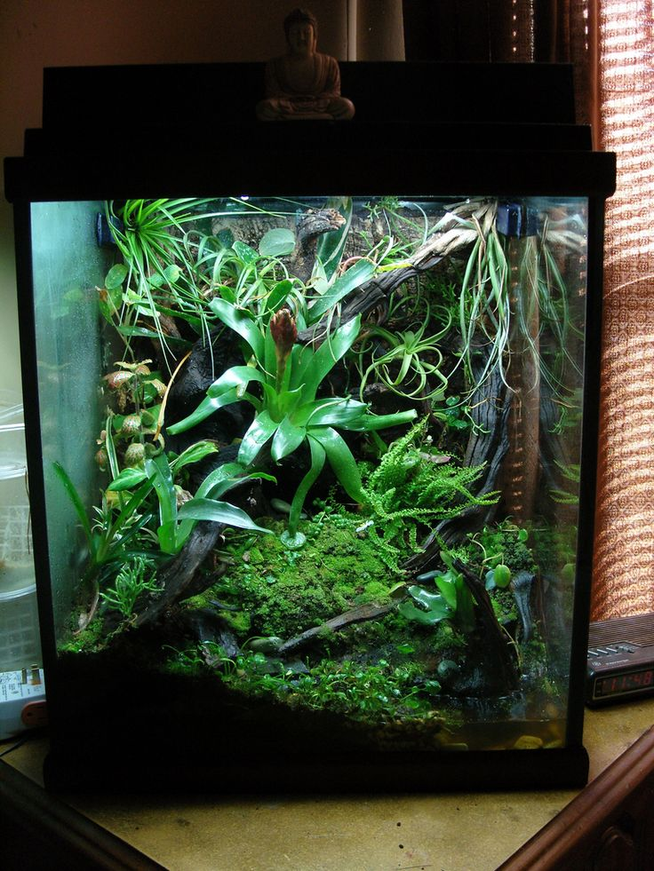 Click the image to open in full size habitats for Fish tank terrarium